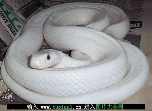 各种颜色的恐怖蛇大全