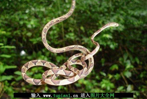 蛇种类大全