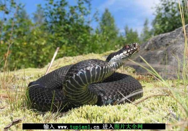 蛇的种类名称及图片 蛇种类