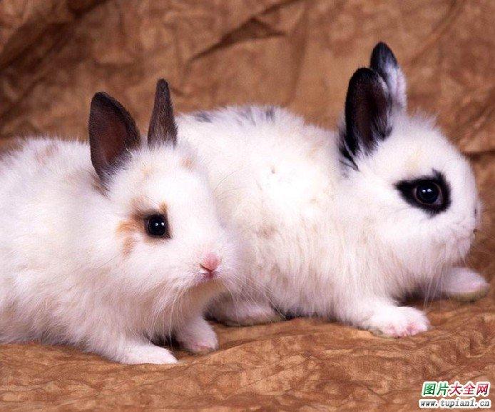 可爱的小白兔图片  理睬 - 网易博客, 远方的家全部视频(七大部共1350