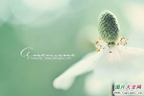 漂亮花卉大全2