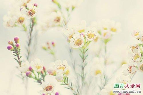 漂亮花卉大全1