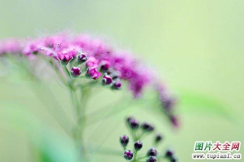 漂亮花卉大全3