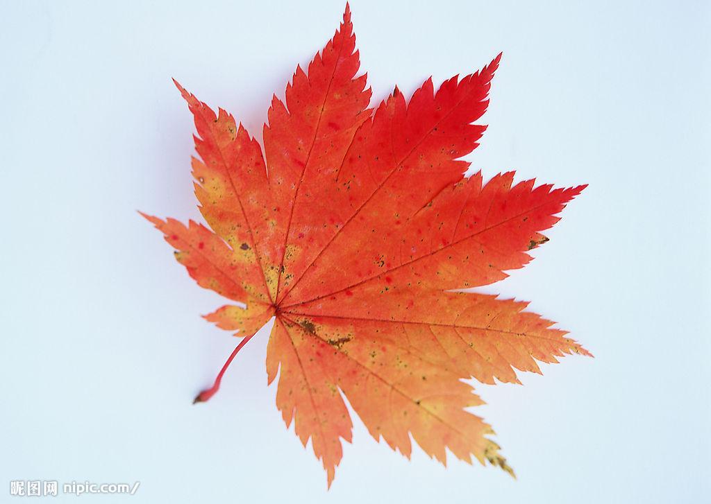 关于秋天的图画
