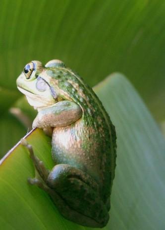 田野里面的青蛙图片大全