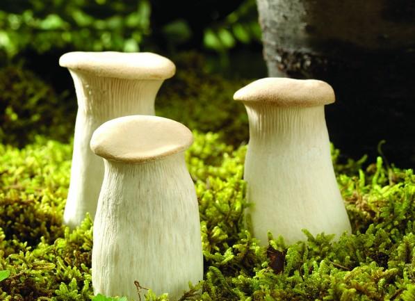 蘑菇的种类_各种种类的野生蘑菇图片_植物图片_TuPian1