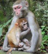 真实的猴子图片大全