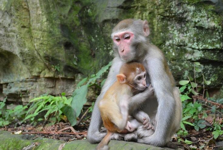 猴子图片大全1