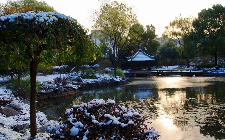 上海公园雪景图片