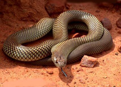 世界十大毒动物_世界十大毒蛇图片_动物图片_TuPian1