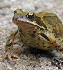 青蛙种类及名称图片